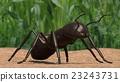 螞蟻 蟲子 漏洞 23243731
