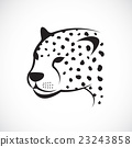 Vector image of an cheetah face. 23243858