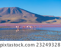"Pink flamingos at ""Laguna Colorada"" on the Andes 23249328"