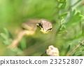 蜥蜴 蝾螈 壁虎 23252807