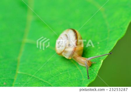 Close-up of a snail 23253287
