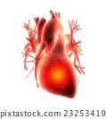 heart organ pain 23253419