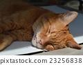 一只猫 23256838