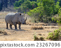 Rhino 23267096