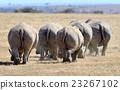Rhino 23267102