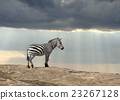 Zebra 23267128