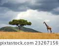 Landscape with tree in Africa 23267156