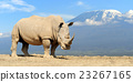 animal, rhino, rhinoceros 23267165