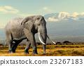 Elephant 23267183
