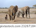 Elephant 23267184