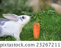 Rabbit 23267211