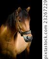 Horse 23267229
