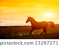 Horse in sunset 23267271