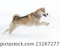 Husky 23267277