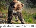 Bear 23267303