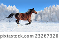 horse winter snow 23267328
