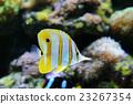 Underwater scene 23267354