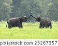 Elephants 23267357
