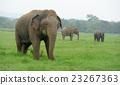 Elephants 23267363