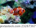 Underwater scene 23267367