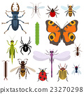 bug insect vector 23270298