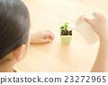 女孩 觀葉植物 室內盆栽 23272965