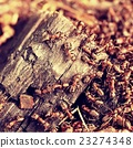 Wild ants build their anthill, big piece of wood. 23274348