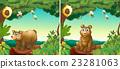 野生生物 起居室 熊 23281063