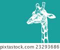 giraffa, giraffe, animal 23293686