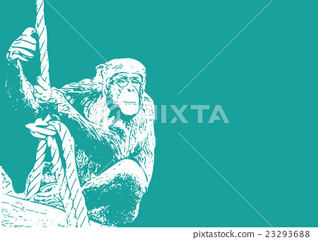 동물, 벡터, 침팬지 23293688