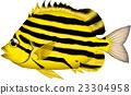 魚 海魚 海水魚 23304958
