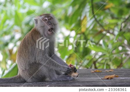 Pam's Island Taman Negara National Park Monkey Meet on Monkey 23308361