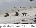 帕姆島的Taman Negara國家公園猴子在猴子見面 23308362