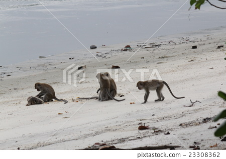 Pam's Island Taman Negara National Park Monkey Meet on Monkey 23308362