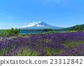 富士山 熏衣草 初夏 23312842