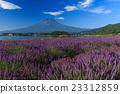 富士山 熏衣草 大石公園 23312859