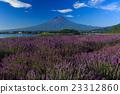 富士山 熏衣草 大石公園 23312860