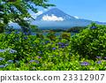 富士山 繡球花 初夏 23312907