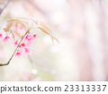 abstract sakura blossom, Soft focus 23313337