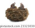 jay's nest 23323030