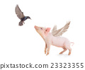 pig and bird 23323355