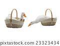duck basket cute 23323434