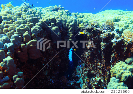 coral reef underwater photo 23325606