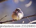 麻雀 分支 鸟儿 23326893