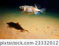 puffer fish bowl 23332012