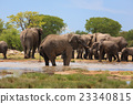Herd of elephants 23340815