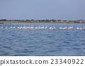 Flock of pink flamingos 23340922