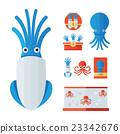 infographic Squid Cartoon set 23342676
