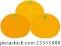 fruit, fruits, mandarin orange 23345888