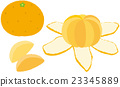 fruit, fruits, mandarin orange 23345889